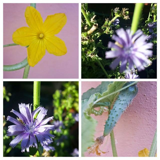 Flores y pepino...