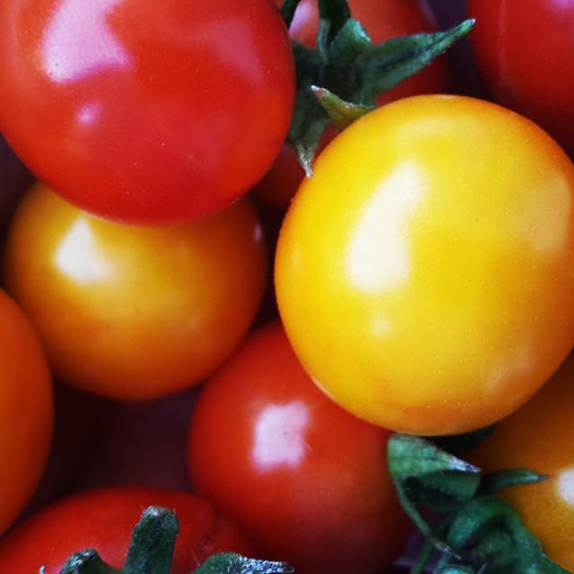 Siguen los tomates dando fruto.